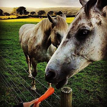 Hungry horses by Alex Nagle