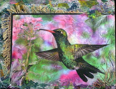 Hungry Hummer by Katey Sandy