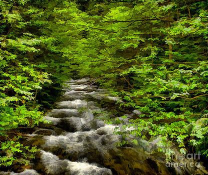 Hunt Creek at Priest Lake by Sam Rosen