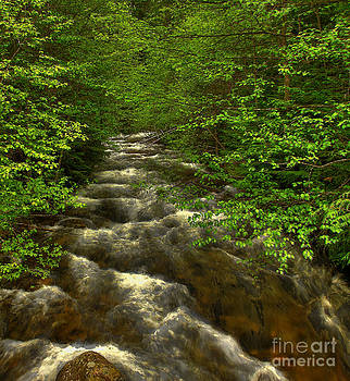 Hunt Creek Foilage by Sam Rosen