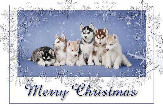 Waldek Dabrowski - Husky Christmas card