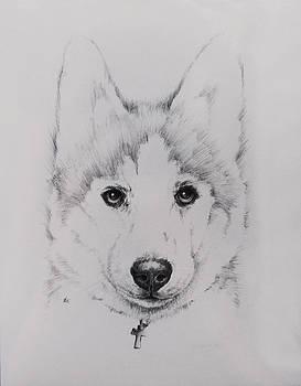 Husky by Rachel Christine Nowicki