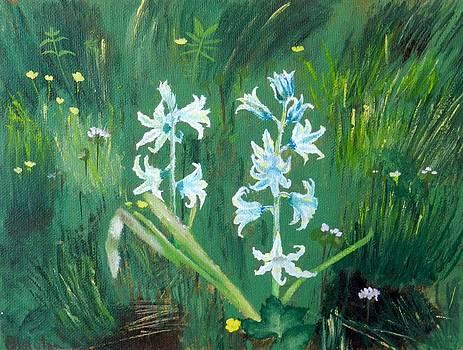 Hyacinths by Olga R