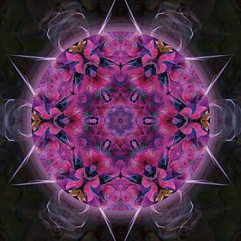 Hydrangea by Alicia Kent