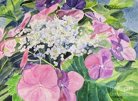 Hydrangea Blooming by Carol Flagg