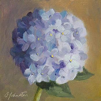 Hydrangea Blossom by Beth Johnston