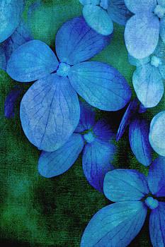 Hydrangea Blues by Christine Annas
