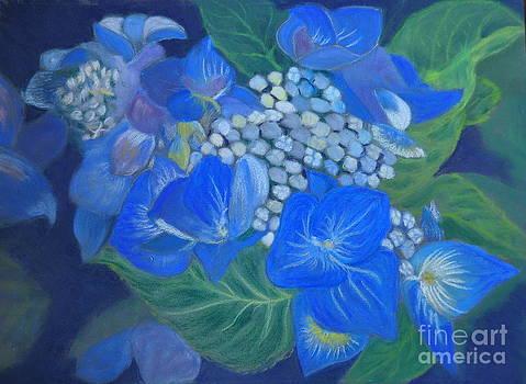 Hydrangea by Calliope Thomas