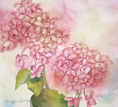 Hydrangea by Heather Gallup