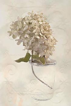 Sandra Foster - Hydrangea Softness