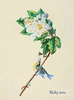 Hydrangea with Yellow Breasted  Vireo after Audubon by Veronica Rickard