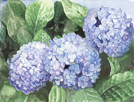 Hydrangea's by Crystal Newton