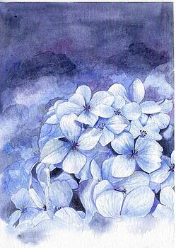 Hydrangeas by Donlapak Chaithavorn