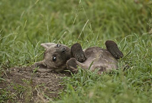Hyena Cub Centerfold by Sandy Schepis