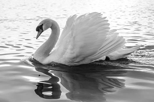 Martina Fagan - I am a Swan