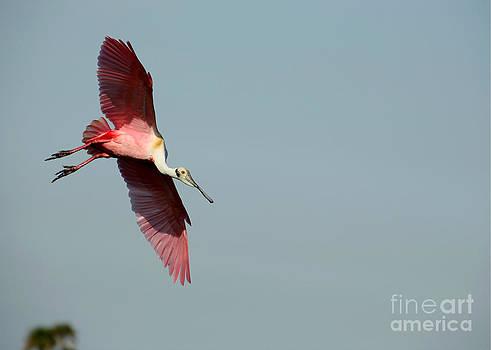 Sabrina L Ryan - I Am Not A Pink Flamingo