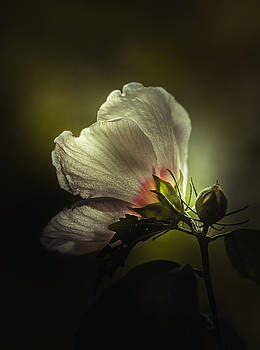 I Can See Right Through You by Paul Barson
