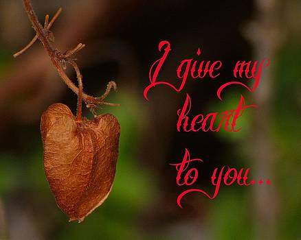 I give my heart to you by Old Pueblo Photography
