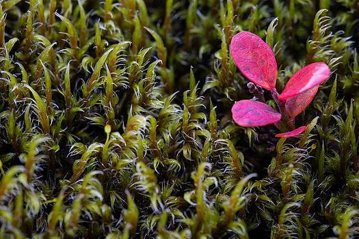I grow where i want... by Arnar B Gudjonsson