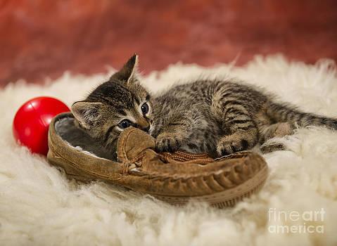 I Haz Shoe by Louise St Romain