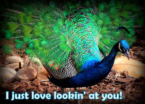 I just love lookin' at you by Amber Joy Eifler