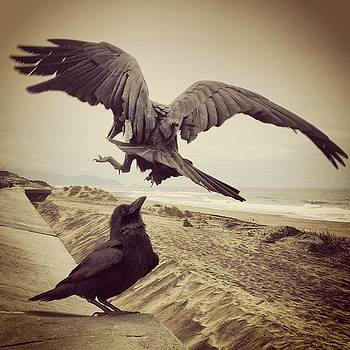I Love Crows. They Seem To Have So Much by Matt Proehl