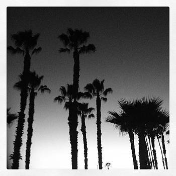 I Love Palm Trees #thisviewnevergetsold by Lacie Vasquez