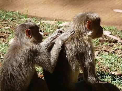 I scratch your back...you scratch mine. by Hemu Aggarwal