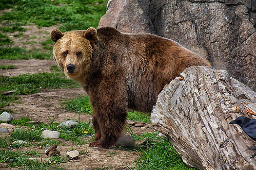 I See A Grizzly Bear by Christy Patino