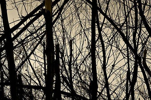 Kantilal Patel - I see sky