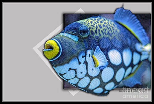Fish - I See Spots by Kip Krause