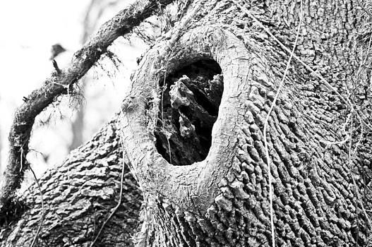 I see you by Teresa Dixon