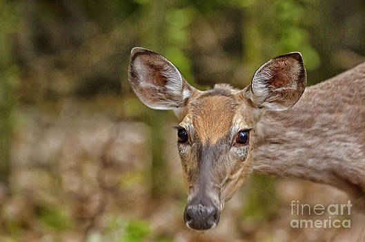 I See You by Timothy J Berndt