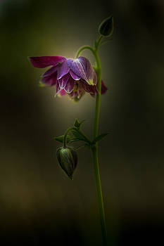 I Shall Look Over You by Paul Barson