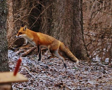 I Smell Rabbit by William Fox