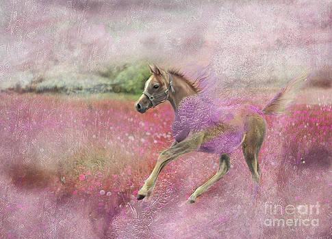 Angel Ciesniarska - i was running through a candy meadow