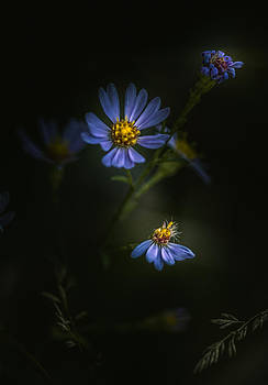 I Will Die For You by Paul Barson