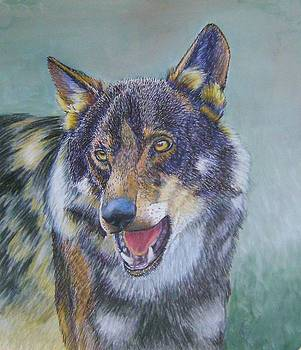Iberian Wolf 2 by Ruth Seal