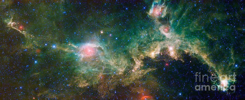 Science Source - Ic 2177-Seagull Nebula