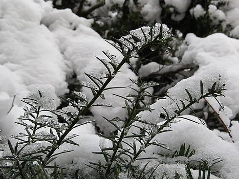 Ice And Pine by Elisabeth Ann