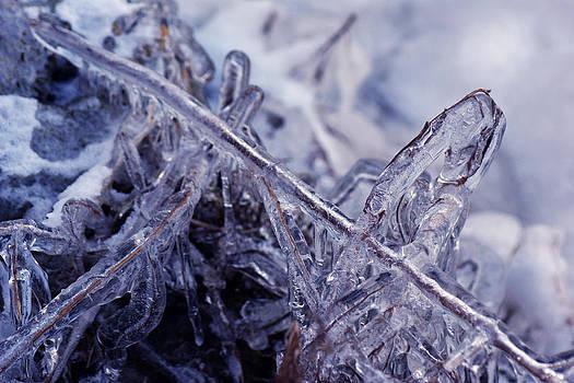 Joe Bledsoe - Ice Blue