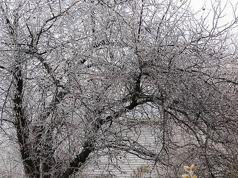 Ice Covered Crab Apple Tree by Elisabeth Ann