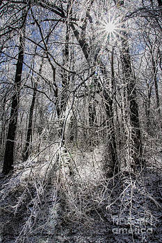 Barbara Bowen - Ice covered trees