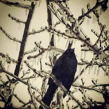 #ice #crow. #icestorm #winter2014 #gloom by Brian Harris