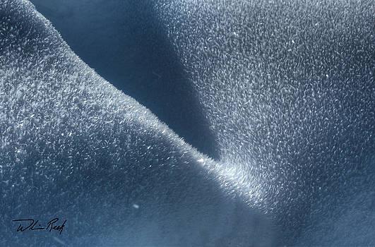 William Reek - Ice Crystals 5
