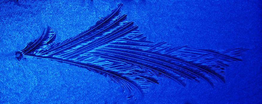 Guy Shultz - Ice Feather 3