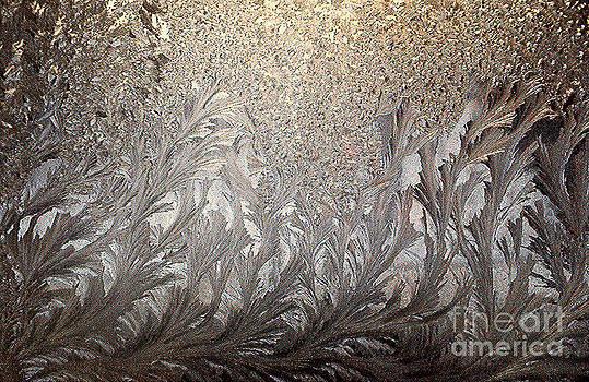 Ice  Forest by Joseph   Geswaldo