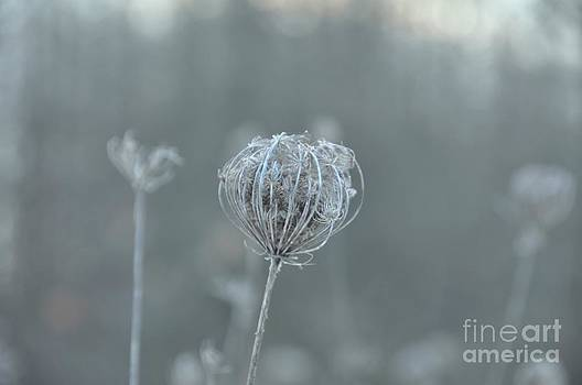 Ice Is In The Air by Paula Sharlea