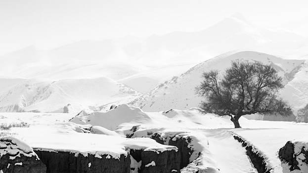 Ice-olation by Stephanus Le Roux
