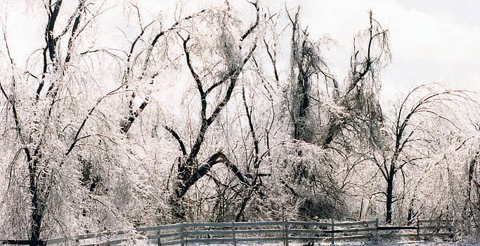 Linda Rae Cuthbertson - Ice Storm 1991
